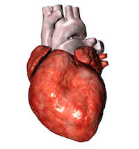 Herzbeutelentzuendung Symptome und Ursachen