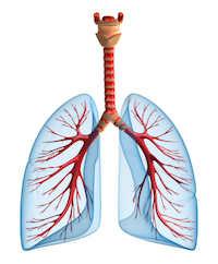 Akute Bronchitis Symptome und Ursachen