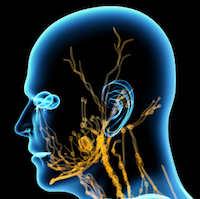 Lymphdruesenkrebs Symptome